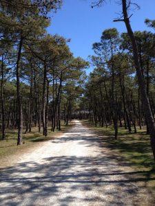 Forêt près du camping du parc à Etaules Royan